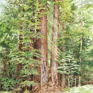 Redwood Loop #2
