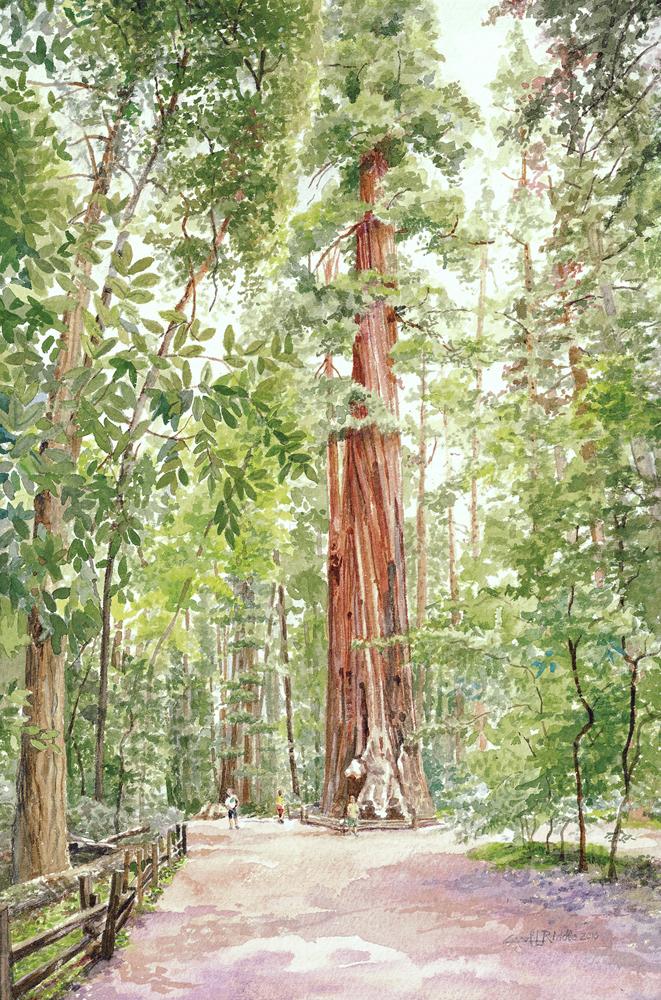Redwood Loop #7
