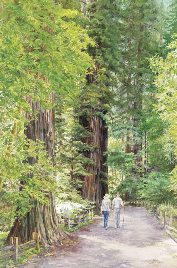 Stroll Through The Redwoods