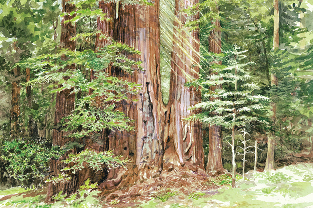 redwood-mountains-gallery