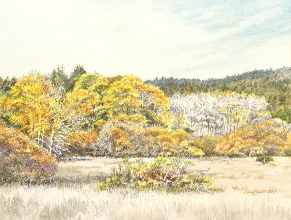Henry Cowell Meadow